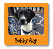 Animals We Helped Bobby Ray